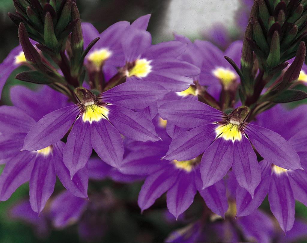 flor-canhota
