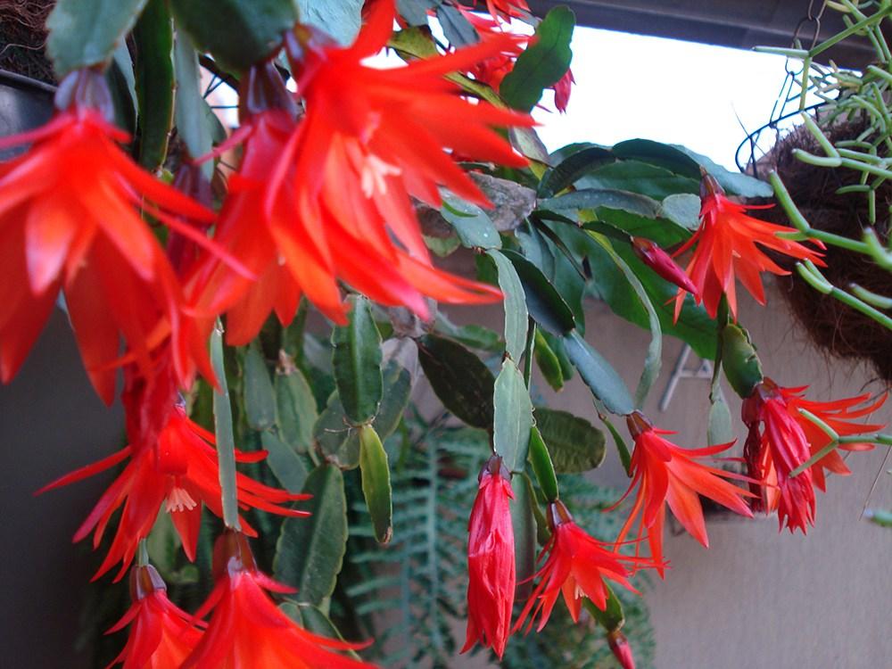 flor-de-outubro