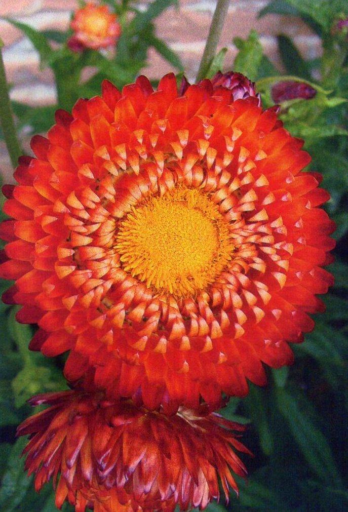 flor de palha