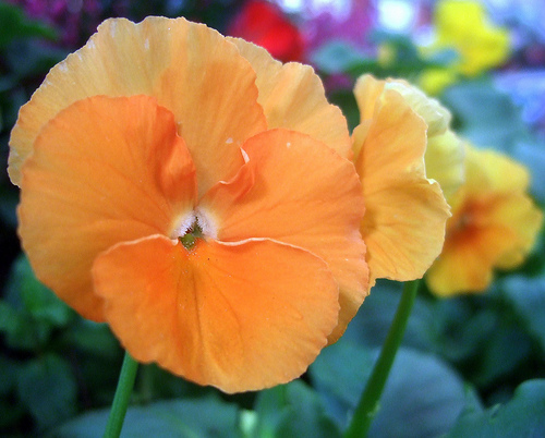 flor do outono
