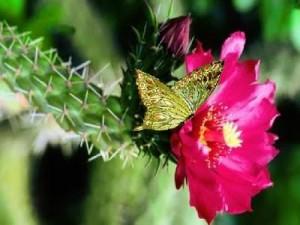 flor-e-cactos