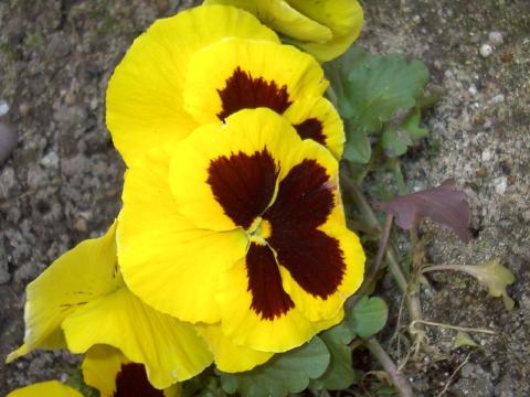 flor-inv21