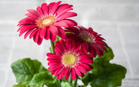 flor-primavera