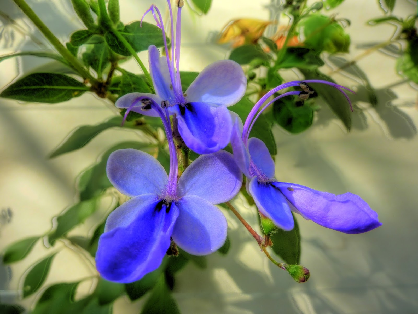 florborboleta