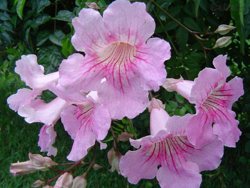_flores-09800