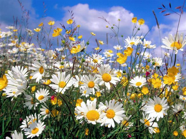 Flores o ano todo  PlantaSonya  O seu blog sobre cultivo de plantas