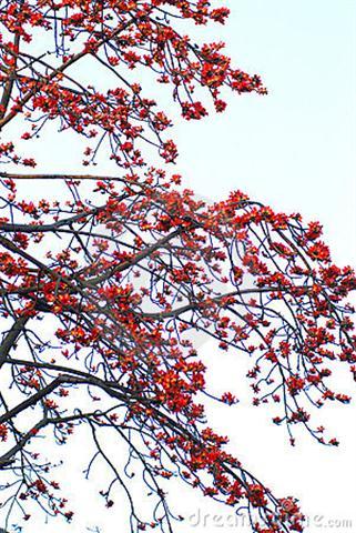 flores-carmesins-da-sumauma
