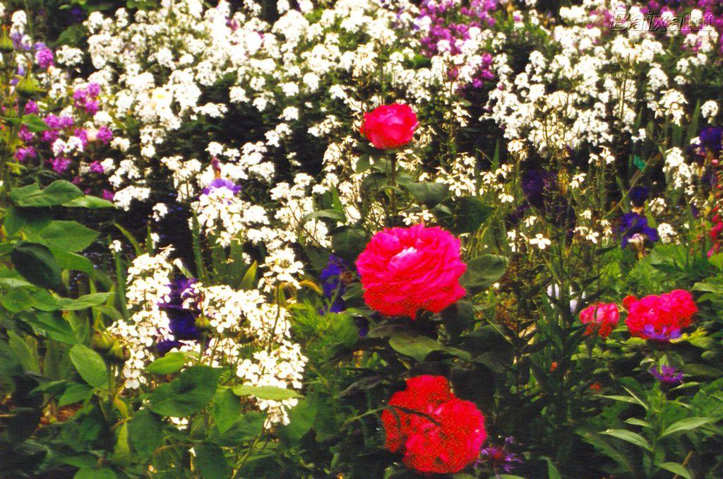 flores para jardim de inverno:http://www.plantasonya.com.br/wp-content/img/flores-de-jardim1.jpg