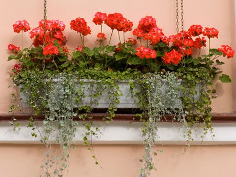 flores-do-terraco