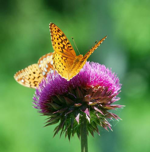 flores-e-borboletas1