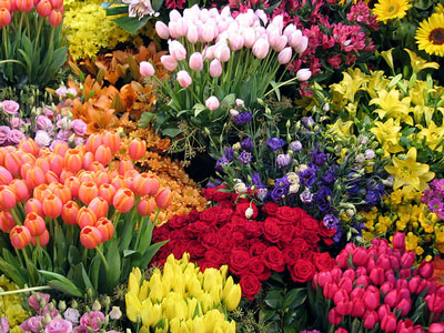flores em jardim