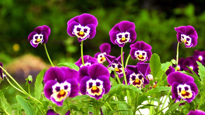 flores-jardim (Medium)