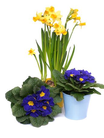 flores-no-seu-apartamento-br