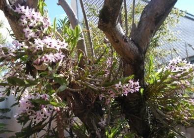 flores-orquideas