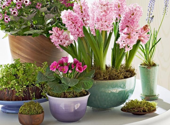 flores-plantadas