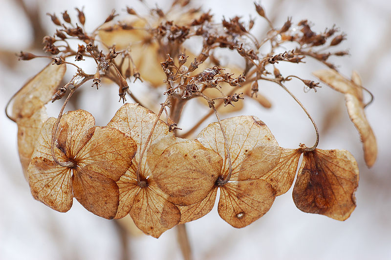 flores secas 1