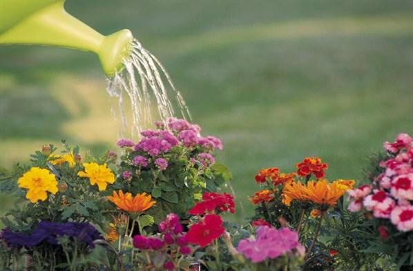 flores-sendo-regada