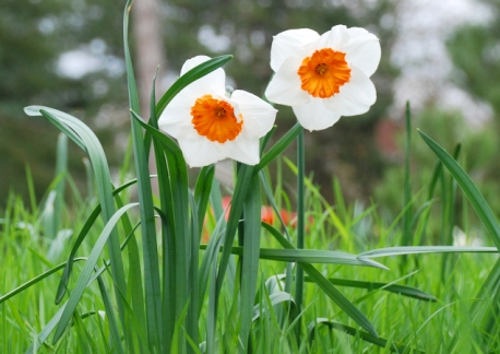 flores1