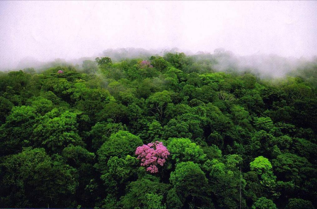 floresta africana