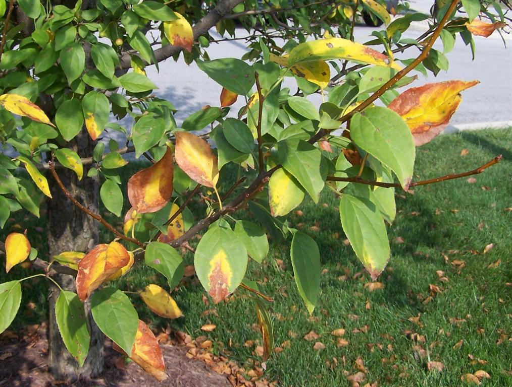 folhas amareladas
