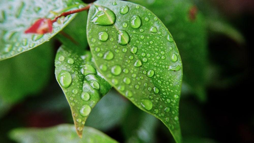 folhas na chuva