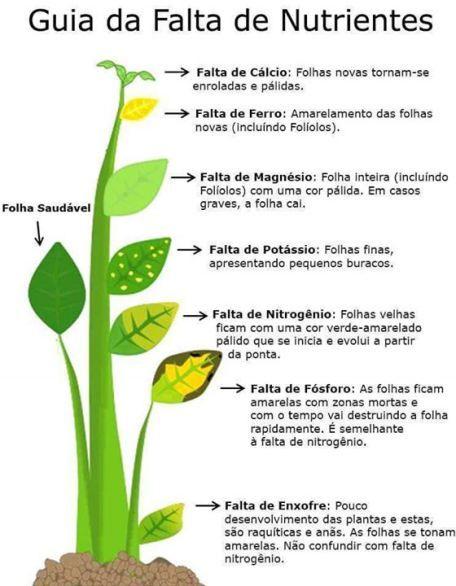 folhas_1