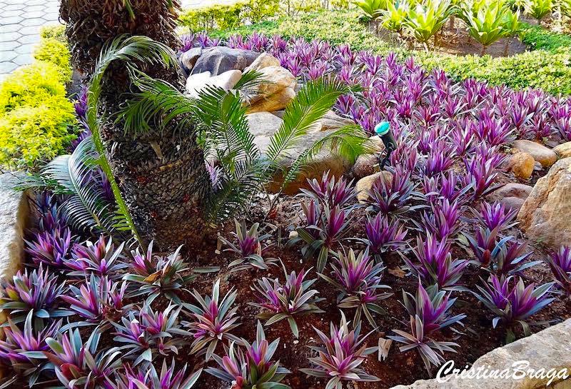 forrações-de-jardim