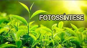fotosíntese