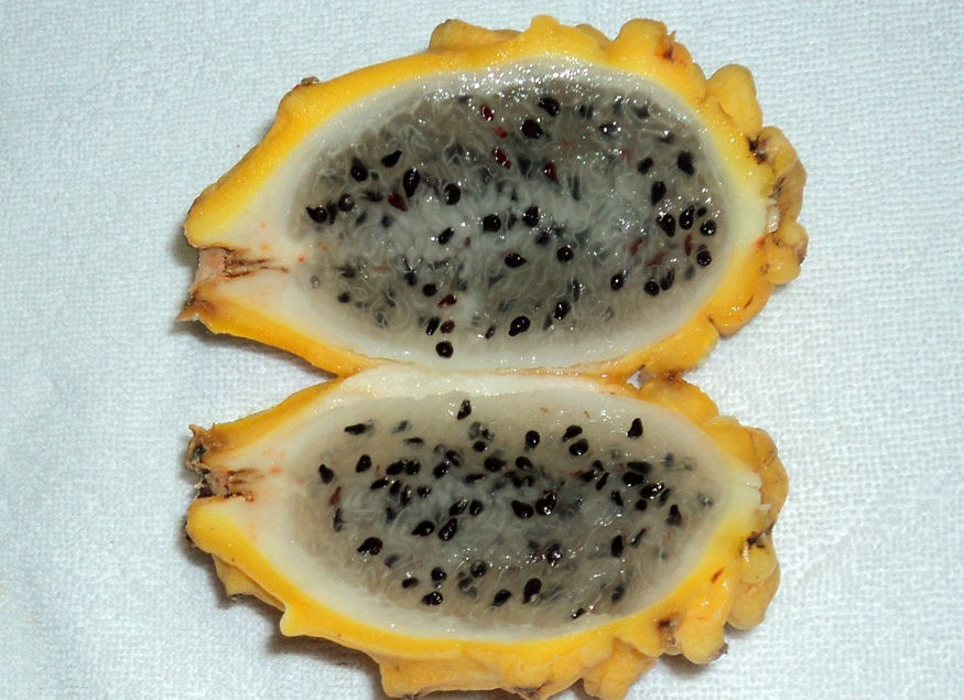 fruto da pitaya-amarela