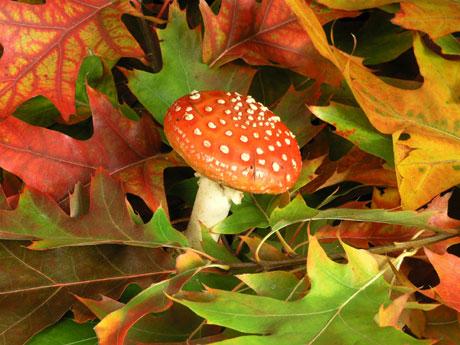 -fungos-das-plantas-l