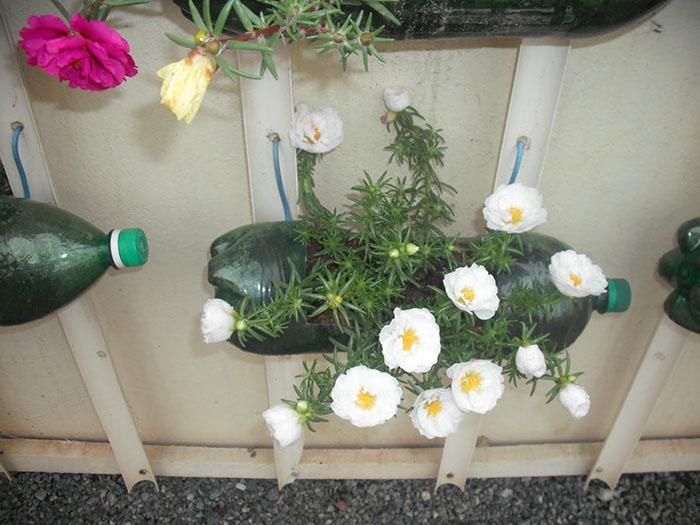 Aprenda a plantar em garrafa Pet - PlantaSonya - O seu blog sobre ...