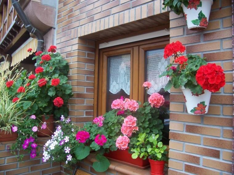 Ger nios plantasonya o seu blog sobre cultivo de for Ver jardines decorados
