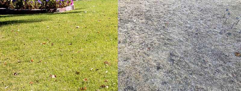 gramado morto