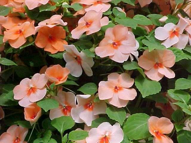 )  PlantaSonya  O seu blog sobre cultivo de plantas e flores