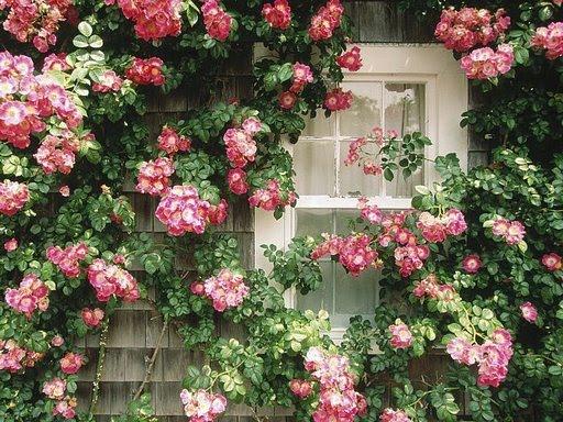 janela floridona
