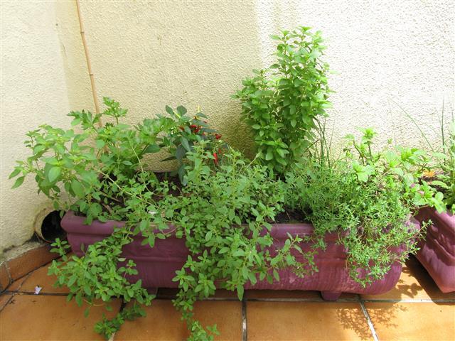 jardim-aromático1