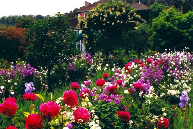 jardim de primavera (Small)