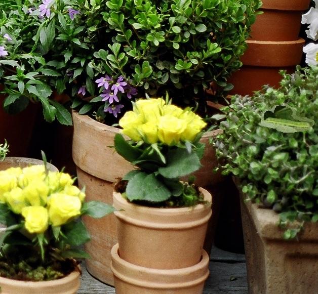 jardim em vasos