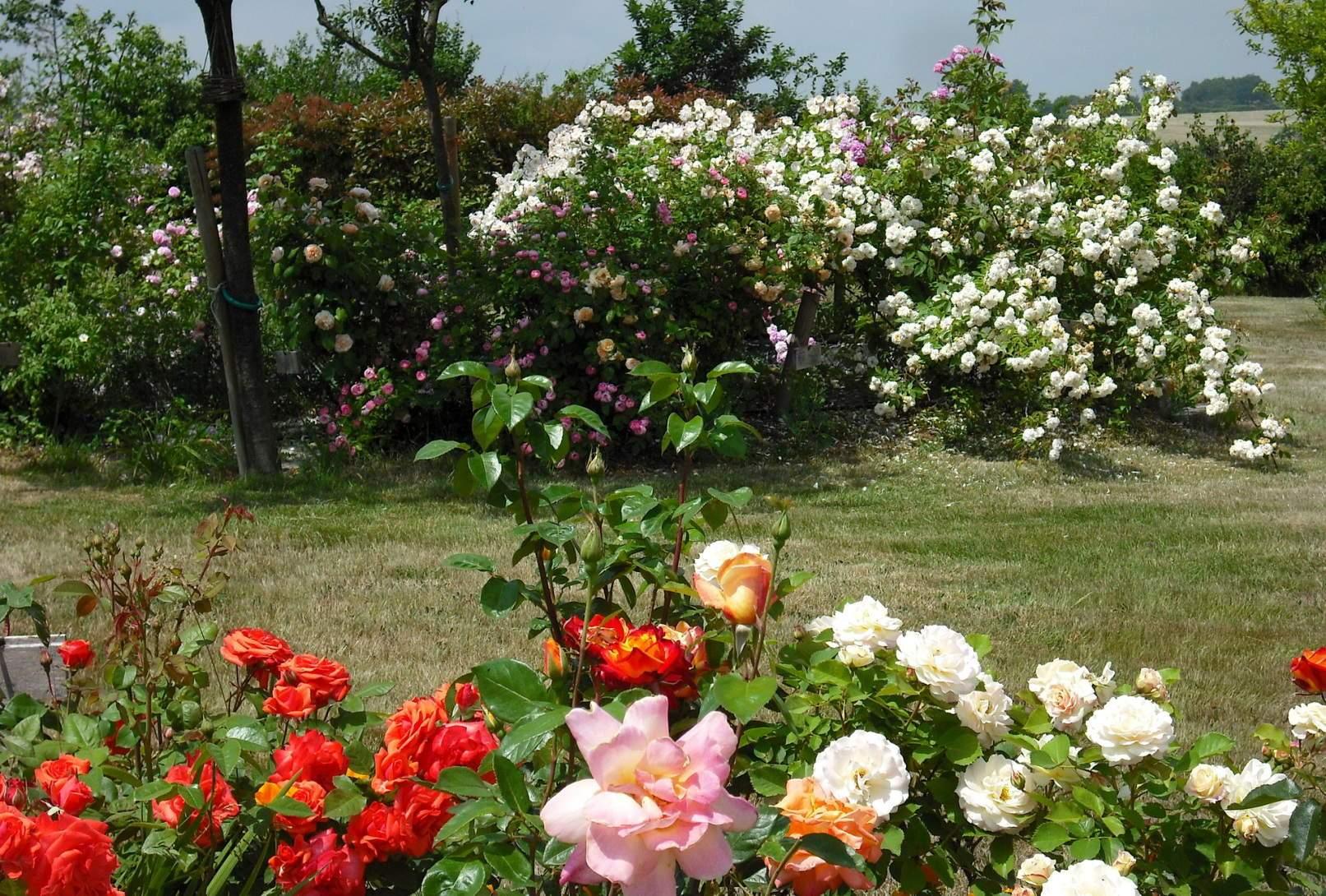 Saiba cultivar flores em jardins plantasonya o seu for Jardin de plantas