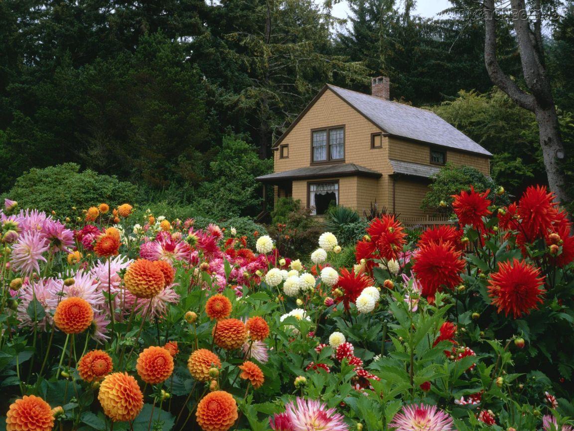 jardim florido