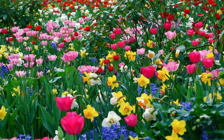 jardim perfumdo