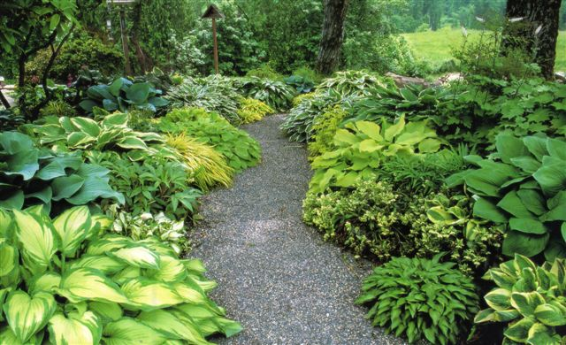 flores jardim sombra : flores jardim sombra: – PlantaSonya – O seu blog sobre cultivo de plantas e flores