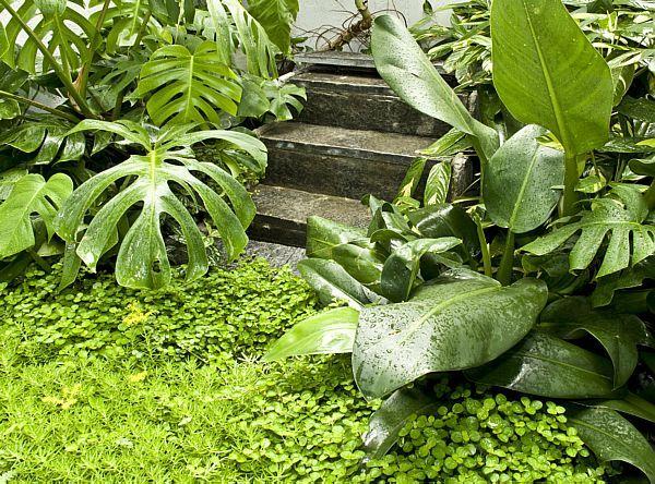 jardim verde