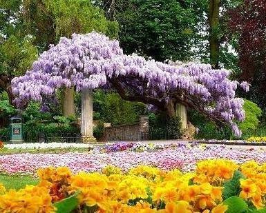 jardim_perfumado