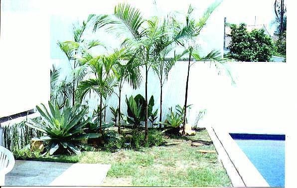 piscina  PlantaSonya  O seu blog sobre cultivo de plantas e flores