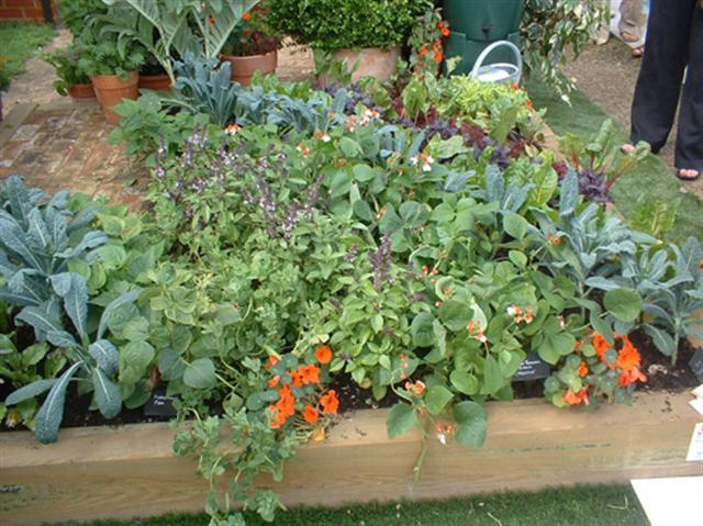 jardinagem (Small)