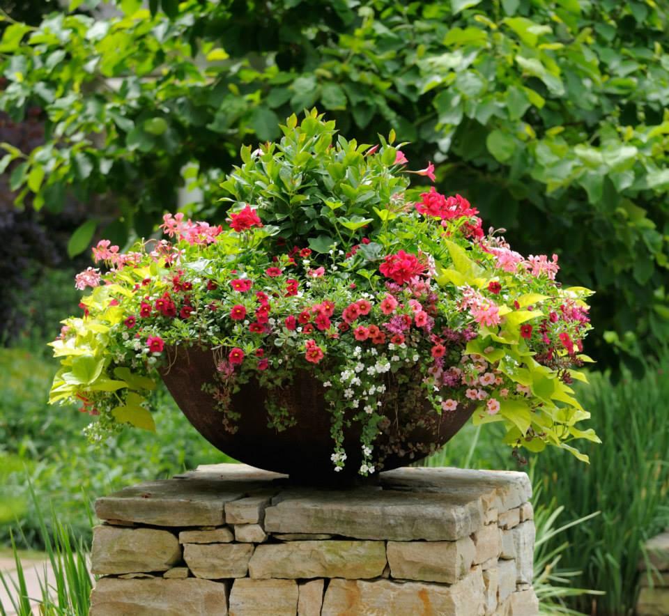 jardinagem em vaso