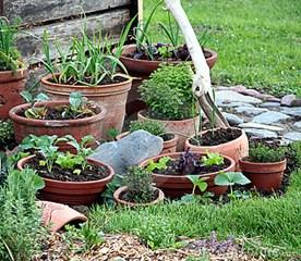 jardinagem-organica