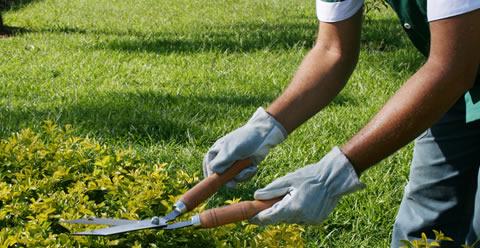 jardinagem_1_