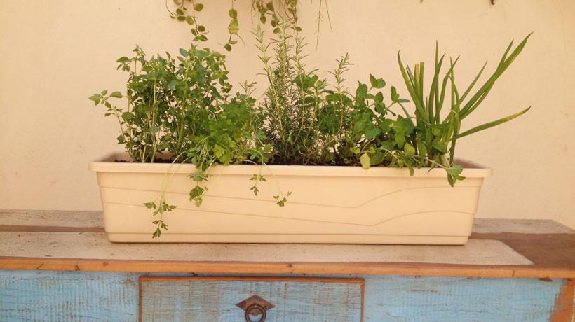 jardineiradeervas
